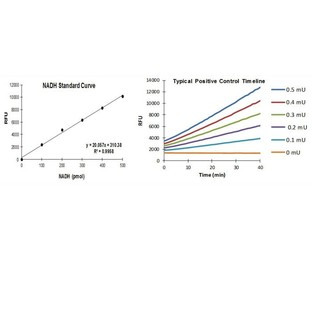 PicoProbe Aldehyde Dehydrogenase Activity Assay Kit